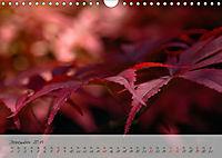 Lichtdurchflutet (Wandkalender 2019 DIN A4 quer) - Produktdetailbild 12