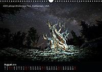 Lichtkunst - Weltreise Markante Bäume (Wandkalender 2019 DIN A3 quer) - Produktdetailbild 8