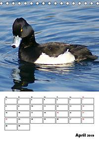 Liebenswerte Enten (Tischkalender 2019 DIN A5 hoch) - Produktdetailbild 4