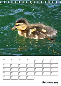 Liebenswerte Enten (Tischkalender 2019 DIN A5 hoch) - Produktdetailbild 2