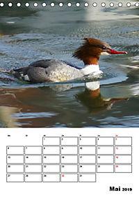 Liebenswerte Enten (Tischkalender 2019 DIN A5 hoch) - Produktdetailbild 5