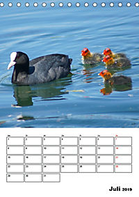 Liebenswerte Enten (Tischkalender 2019 DIN A5 hoch) - Produktdetailbild 7