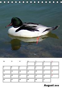 Liebenswerte Enten (Tischkalender 2019 DIN A5 hoch) - Produktdetailbild 8