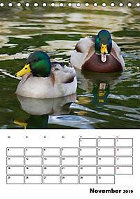 Liebenswerte Enten (Tischkalender 2019 DIN A5 hoch) - Produktdetailbild 11