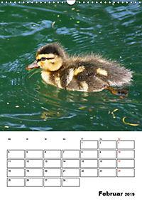 Liebenswerte Enten (Wandkalender 2019 DIN A3 hoch) - Produktdetailbild 2