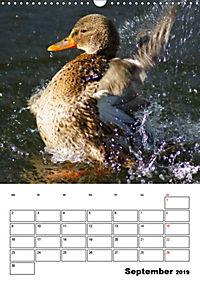 Liebenswerte Enten (Wandkalender 2019 DIN A3 hoch) - Produktdetailbild 9