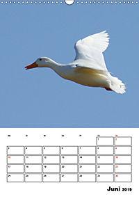Liebenswerte Enten (Wandkalender 2019 DIN A3 hoch) - Produktdetailbild 6