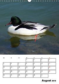 Liebenswerte Enten (Wandkalender 2019 DIN A3 hoch) - Produktdetailbild 8