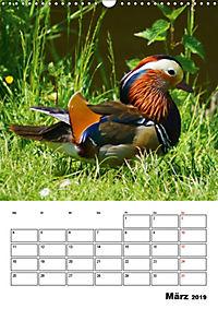 Liebenswerte Enten (Wandkalender 2019 DIN A3 hoch) - Produktdetailbild 3