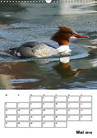 Liebenswerte Enten (Wandkalender 2019 DIN A3 hoch) - Produktdetailbild 5