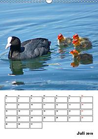 Liebenswerte Enten (Wandkalender 2019 DIN A3 hoch) - Produktdetailbild 7