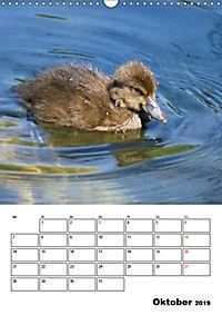 Liebenswerte Enten (Wandkalender 2019 DIN A3 hoch) - Produktdetailbild 10