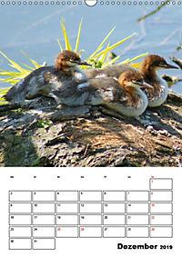 Liebenswerte Enten (Wandkalender 2019 DIN A3 hoch) - Produktdetailbild 12