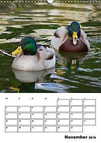 Liebenswerte Enten (Wandkalender 2019 DIN A3 hoch) - Produktdetailbild 11
