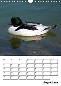 Liebenswerte Enten (Wandkalender 2019 DIN A4 hoch) - Produktdetailbild 8