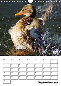 Liebenswerte Enten (Wandkalender 2019 DIN A4 hoch) - Produktdetailbild 9