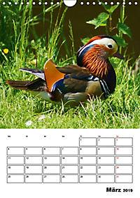 Liebenswerte Enten (Wandkalender 2019 DIN A4 hoch) - Produktdetailbild 3