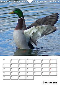 Liebenswerte Enten (Wandkalender 2019 DIN A4 hoch) - Produktdetailbild 1