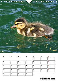 Liebenswerte Enten (Wandkalender 2019 DIN A4 hoch) - Produktdetailbild 2