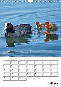 Liebenswerte Enten (Wandkalender 2019 DIN A4 hoch) - Produktdetailbild 7