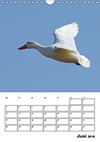 Liebenswerte Enten (Wandkalender 2019 DIN A4 hoch) - Produktdetailbild 6