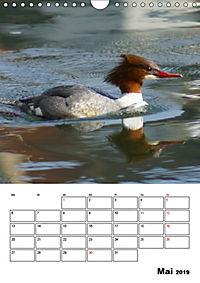 Liebenswerte Enten (Wandkalender 2019 DIN A4 hoch) - Produktdetailbild 5