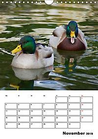 Liebenswerte Enten (Wandkalender 2019 DIN A4 hoch) - Produktdetailbild 11