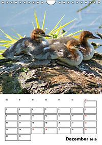 Liebenswerte Enten (Wandkalender 2019 DIN A4 hoch) - Produktdetailbild 12