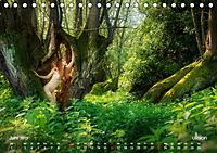 Lieblingsbäume - eins mit der Natur (Tischkalender 2019 DIN A5 quer) - Produktdetailbild 6