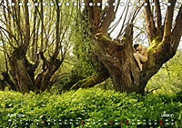 Lieblingsbäume - eins mit der Natur (Tischkalender 2019 DIN A5 quer) - Produktdetailbild 4