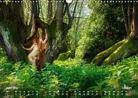 Lieblingsbäume - eins mit der Natur (Wandkalender 2019 DIN A3 quer) - Produktdetailbild 6