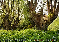 Lieblingsbäume - eins mit der Natur (Wandkalender 2019 DIN A3 quer) - Produktdetailbild 4