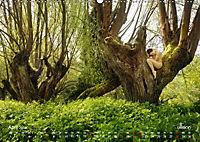 Lieblingsbäume - eins mit der Natur (Wandkalender 2019 DIN A2 quer) - Produktdetailbild 4