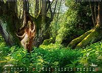 Lieblingsbäume - eins mit der Natur (Wandkalender 2019 DIN A2 quer) - Produktdetailbild 6