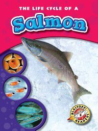 Life Cycles: The Life Cycle of a Salmon, Colleen Sexton
