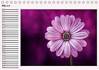 Lila - die mystische Farbe (Tischkalender 2019 DIN A5 quer) - Produktdetailbild 5