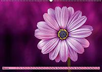 Lila - die mystische Farbe (Wandkalender 2019 DIN A2 quer) - Produktdetailbild 5
