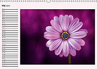 Lila - die mystische Farbe (Wandkalender 2019 DIN A3 quer) - Produktdetailbild 5