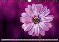 Lila - die mystische Farbe (Wandkalender 2019 DIN A4 quer) - Produktdetailbild 5