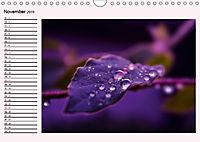 Lila - die mystische Farbe (Wandkalender 2019 DIN A4 quer) - Produktdetailbild 11