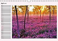 Lila - die mystische Farbe (Wandkalender 2019 DIN A4 quer) - Produktdetailbild 4