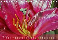 Lilien ganz nah (Tischkalender 2019 DIN A5 quer) - Produktdetailbild 4