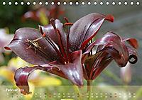 Lilien ganz nah (Tischkalender 2019 DIN A5 quer) - Produktdetailbild 2
