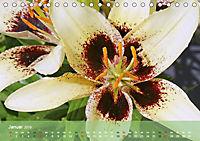 Lilien ganz nah (Tischkalender 2019 DIN A5 quer) - Produktdetailbild 1