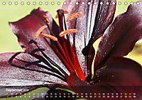 Lilien ganz nah (Tischkalender 2019 DIN A5 quer) - Produktdetailbild 9