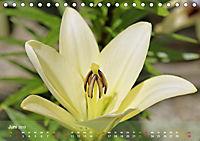 Lilien ganz nah (Tischkalender 2019 DIN A5 quer) - Produktdetailbild 6