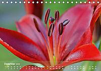 Lilien ganz nah (Tischkalender 2019 DIN A5 quer) - Produktdetailbild 12