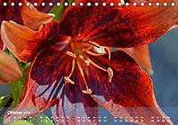 Lilien ganz nah (Tischkalender 2019 DIN A5 quer) - Produktdetailbild 10