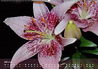 Lilien ganz nah (Wandkalender 2019 DIN A2 quer) - Produktdetailbild 7