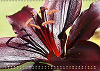 Lilien ganz nah (Wandkalender 2019 DIN A2 quer) - Produktdetailbild 9